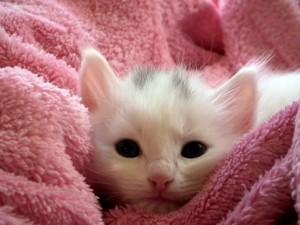 kitten-227009_640
