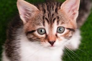 dreamstime_m_27795764 kitten