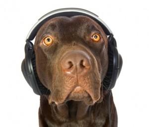 dreamstime_xs_8151360 lab with headphones